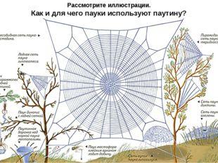 Рассмотрите иллюстрации. Как и для чего пауки используют паутину?