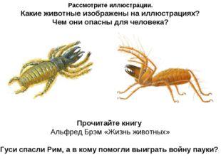 Рассмотрите иллюстрации. Какие животные изображены на иллюстрациях? Чем они о