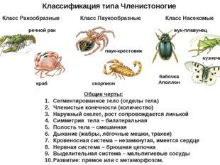 Классификация типа Членистоногие речной рак краб паук-крестовик скорпион жук-