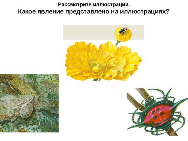 Рассмотрите иллюстрации. Какое явление представлено на иллюстрациях?