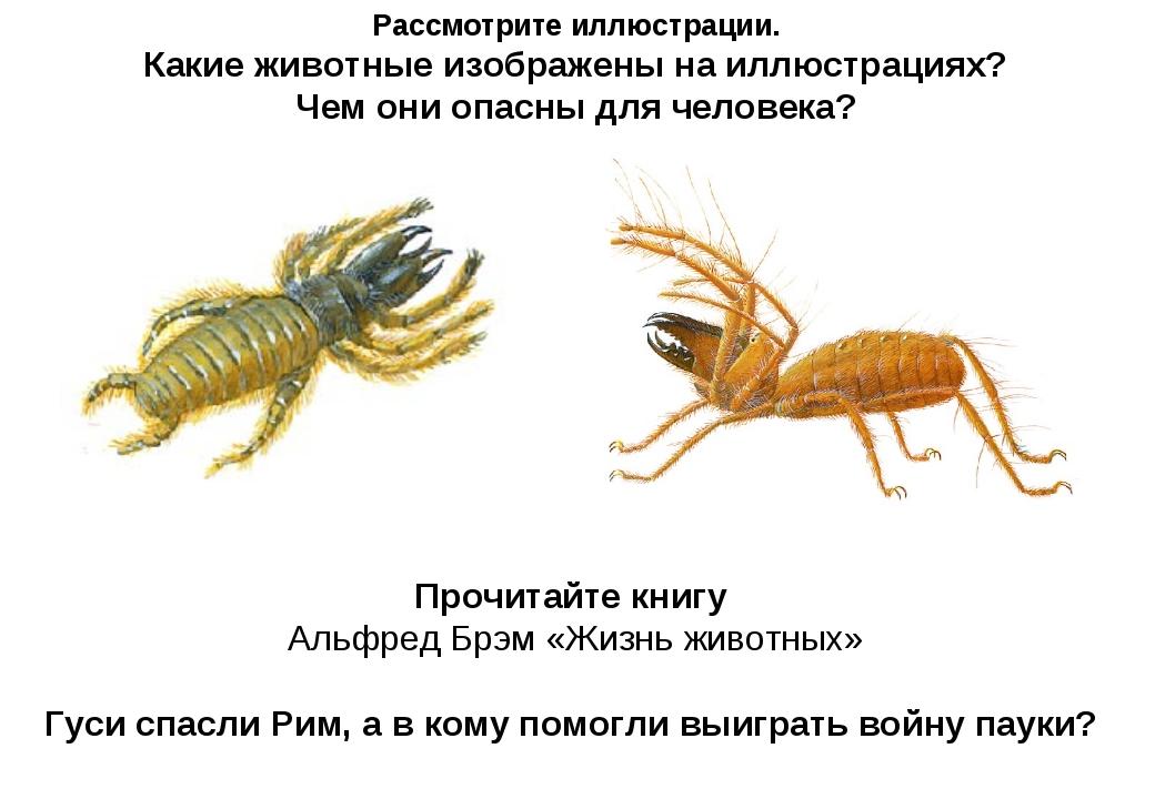 Рассмотрите иллюстрации. Какие животные изображены на иллюстрациях? Чем они о...