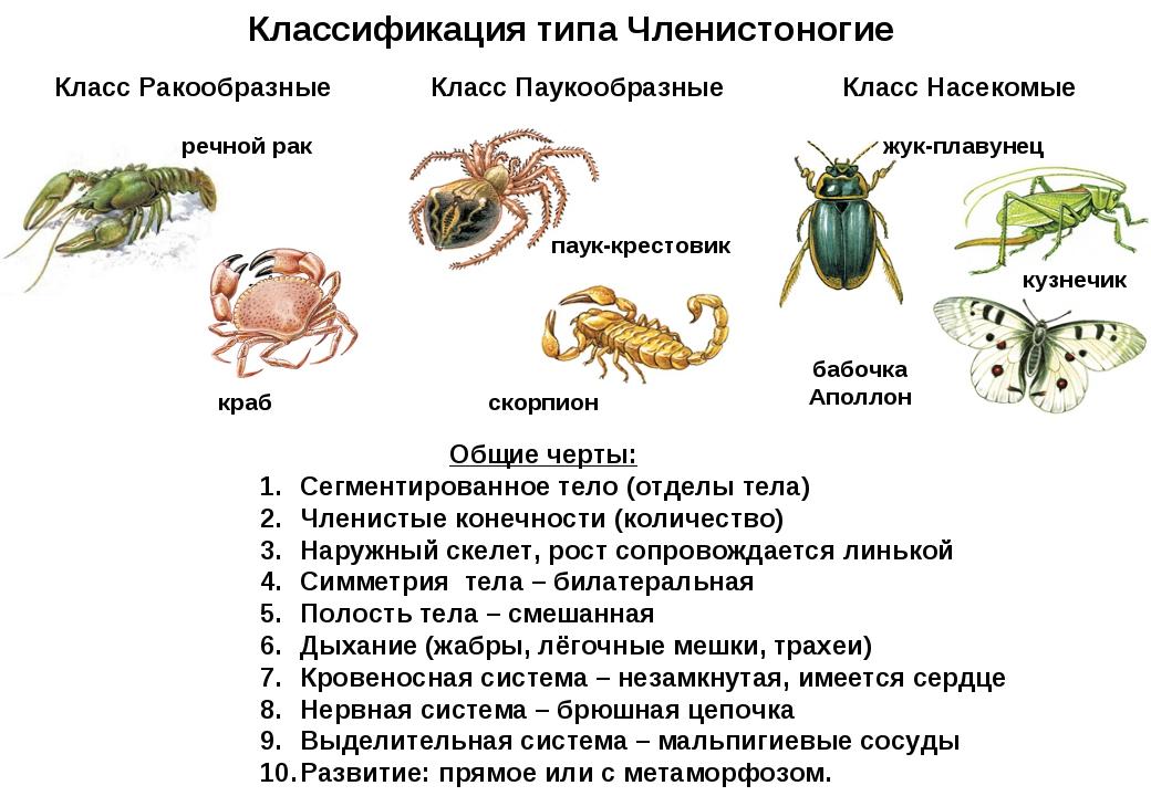 Тесты по биологии 7 класс паукообразные