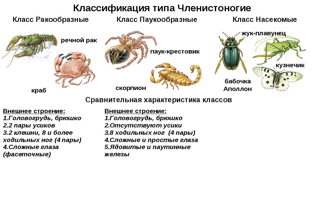 Классификация типа Членистоногие речной рак краб паук-крестовик скорпион жук-...