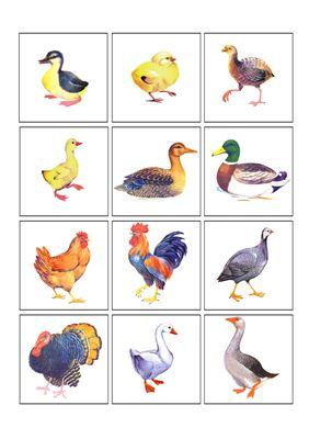 Раздаточный материал домашние птицы