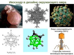 Структура типичного минивируса бактериофага Вирус иммунодефицита человека (ВИ