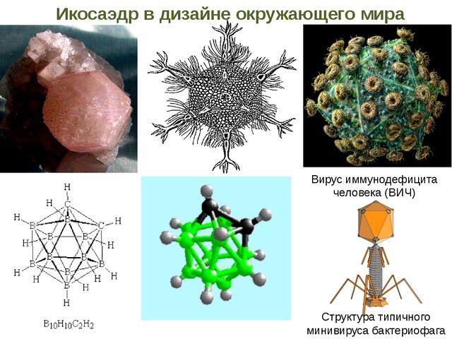 Структура типичного минивируса бактериофага Вирус иммунодефицита человека (ВИ...