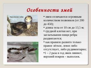 змеи отличаются огромным количеством позвонков (от 200 до 450); длина тела о
