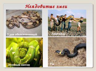 Неядовитые змеи Удав обыкновенный Анаконда Уж Зеленый питон
