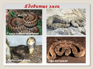 Ядовитые змеи Удав обыкновенный Анаконда Уж Кобра очкастая Гадюка обыкновенна