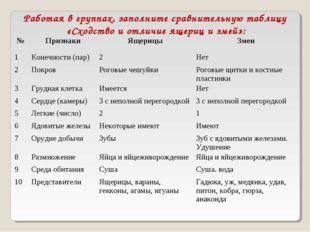 Работая в группах, заполните сравнительную таблицу «Сходство и отличие ящериц