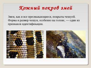 Змеи, как и все пресмыкающиеся, покрыты чешуей. Форма и размер чешуи, особенн
