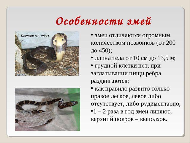 змеи отличаются огромным количеством позвонков (от 200 до 450); длина тела о...