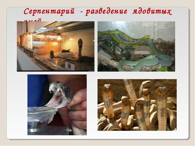 Серпентарий - разведение ядовитых змей