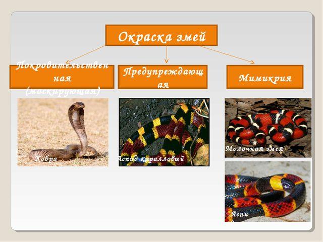Окраска змей Покровительственная (маскирующая) Мимикрия Предупреждающая Аспид...