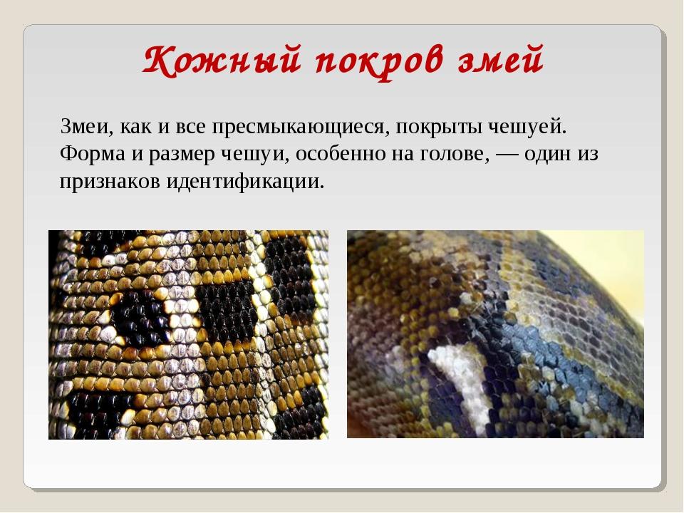 Змеи, как и все пресмыкающиеся, покрыты чешуей. Форма и размер чешуи, особенн...