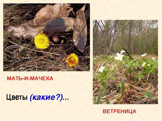 Цветы (какие?)…