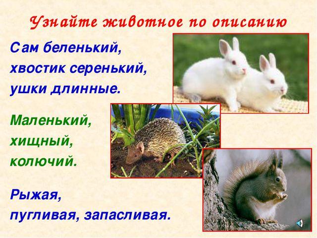 Узнайте животное по описанию Сам беленький, хвостик серенький, ушки длинные....