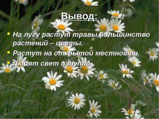Вывод: На лугу растут травы,большинство растений – цветы. Растут на открытой
