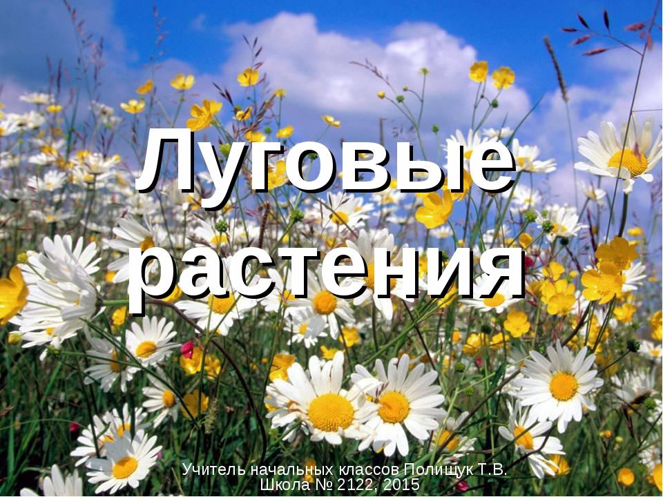 Луговые растения Учитель начальных классов Полищук Т.В. Школа № 2122, 2015