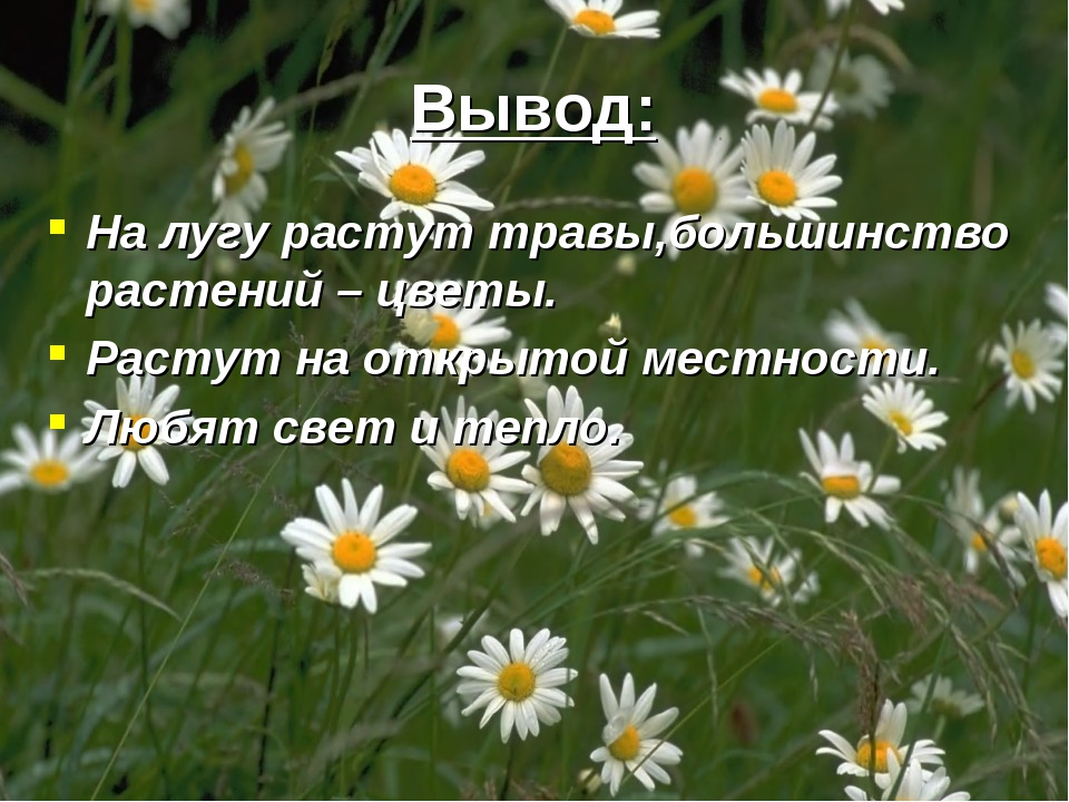 Вывод: На лугу растут травы,большинство растений – цветы. Растут на открытой...