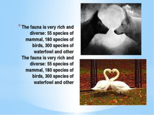 The fauna is very rich and diverse: 55 species of mammal, 180 species of bird