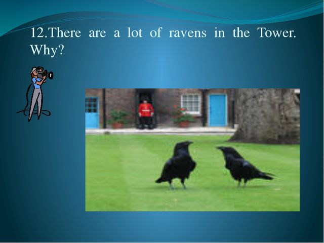 12.There  are  a  lot  of  ravens  in  the  Tower. Why?