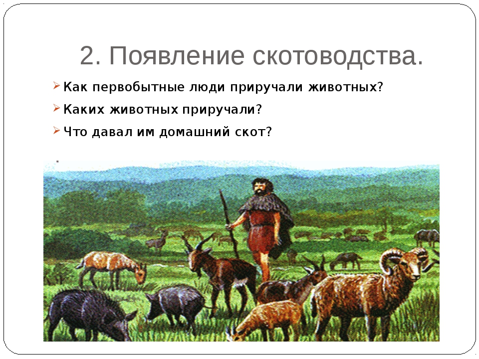 2. Появление скотоводства. Как первобытные люди приручали животных? Каких жив...