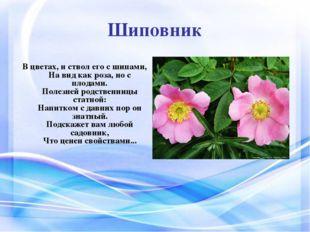 Шиповник В цветах, и ствол его с шипами, На вид как роза, но с плодами. Полез