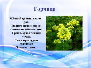 Горчица Жёлтый цветик в поле рос, На него зимою спрос: Семена целебно-жгучи,