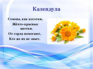 Календула Семена, как коготки, Жёлто-красные цветки. От горла помогают, Кт