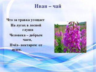Иван – чай Что за травка угощает На лугах в лесной глуши Человека – добрым ча