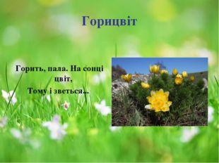 Горицвіт Горить, пала. На сонці цвіт, Тому і зветься...