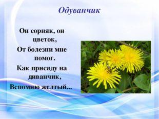 Одуванчик Он сорняк, он цветок, От болезни мне помог. Как присяду на диванчик