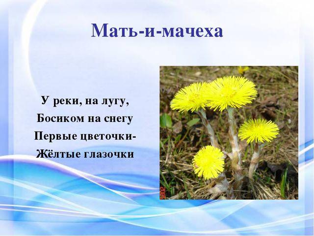 Мать-и-мачеха У реки, на лугу, Босиком на снегу Первые цветочки- Жёлтые глазо...