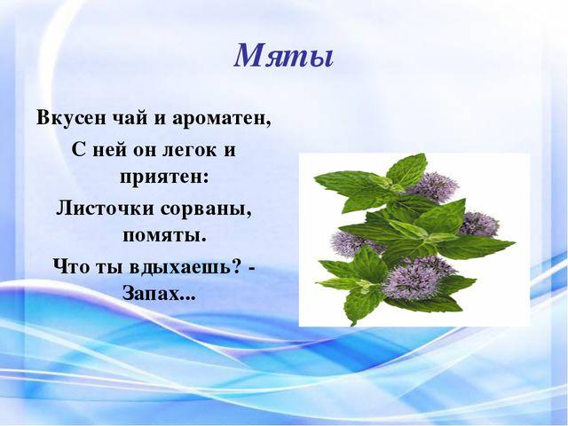 Мяты Вкусен чай и ароматен, С ней он легок и приятен: Листочки сорваны, помят...