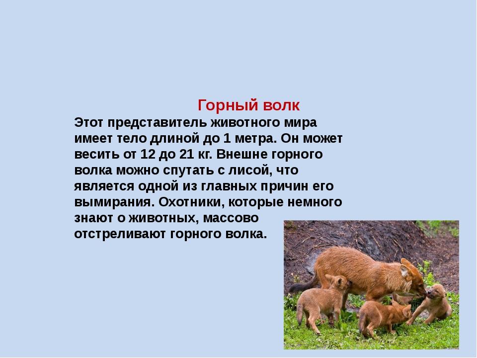 Горный волк Этот представитель животного мира имеет тело длиной до 1 метра....
