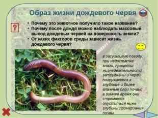 Лабораторная работа «Внешнее строение дождевого червя» Цель: изучить строени