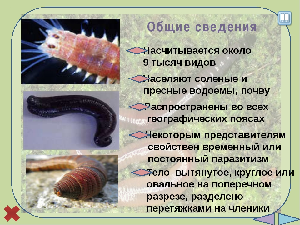 Вопросы по теме «Кольчатые черви» 1 2 3 4 5 6 Представители типа имеют длинн...