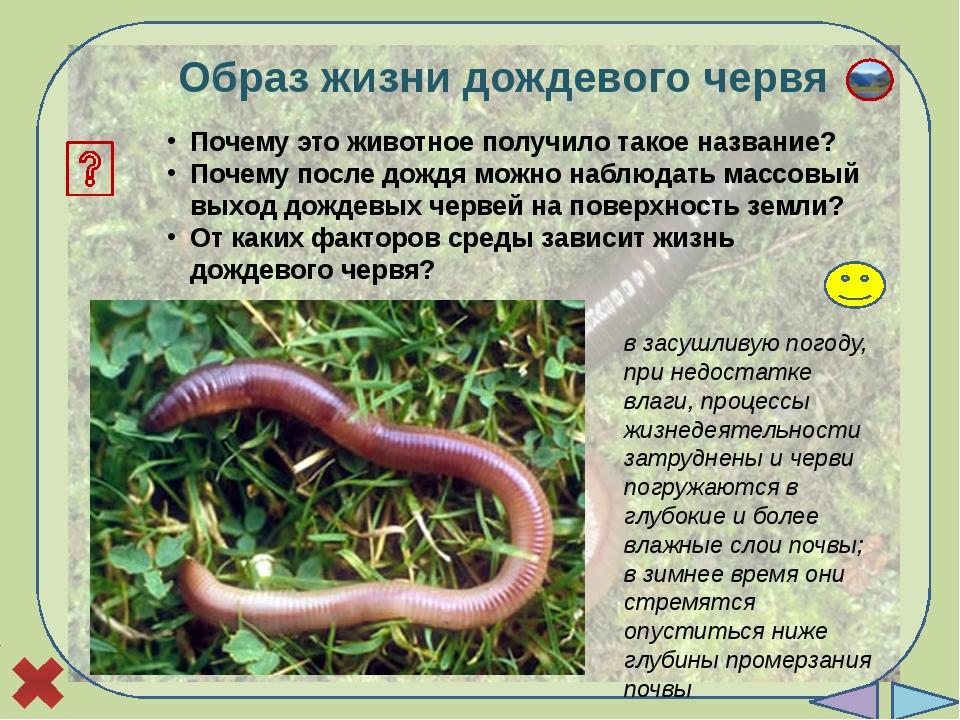 Лабораторная работа «Внешнее строение дождевого червя» Цель: изучить строени...