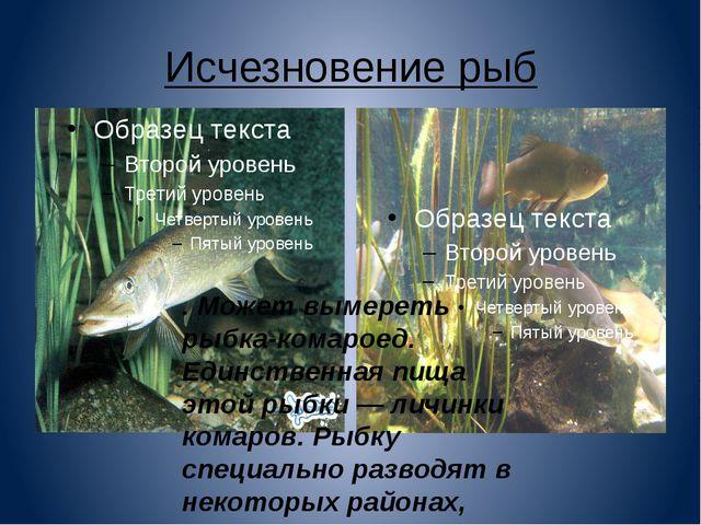 Исчезновение рыб . Может вымереть рыбка-комароед. Единственная пища этой рыбк...