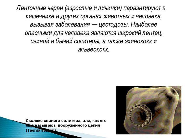 Ленточные черви (взрослые и личинки) паразитируют в кишечнике и других органа...