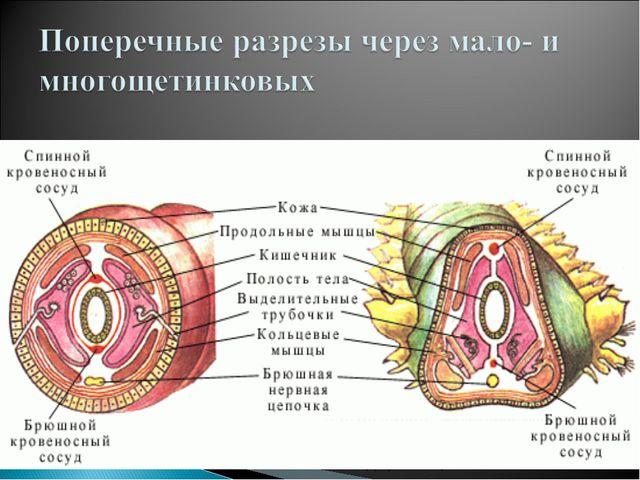 (С) Шулепова Т.В., 2009