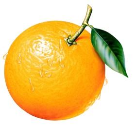 apelsin_logo.jpg
