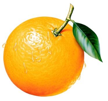 C:\Users\Вредная Липко\Desktop\ВСЁ С ФЛЭХИ\ЛОТО\apelsin_logo.jpg