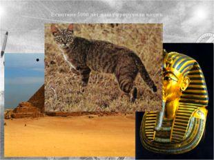 Египтяне 5000 лет назад приручили кошек