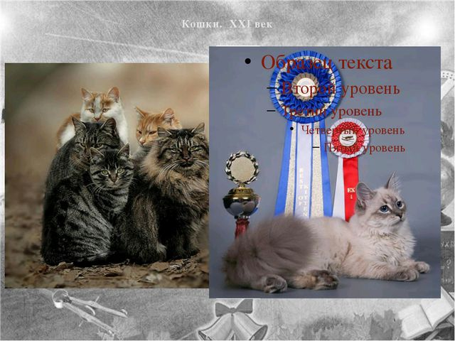 Кошки. XXI век