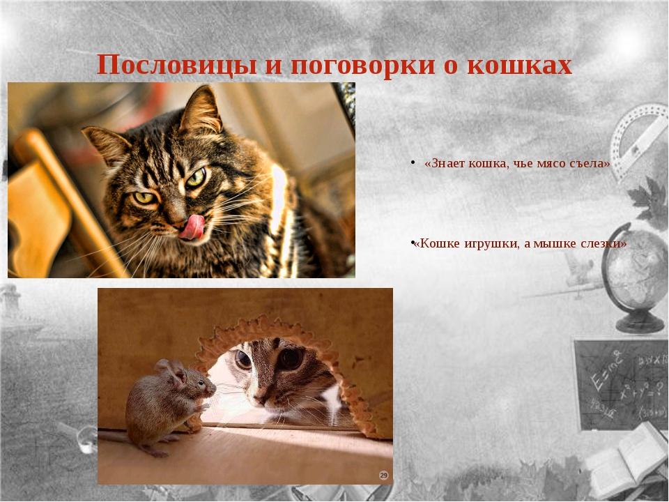 Пословицы и поговорки о кошках «Знает кошка, чье мясо съела» «Кошке игрушки,...