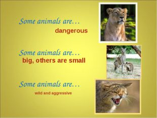 Some animals are… Some animals are… Some animals are… dangerous wild and aggr