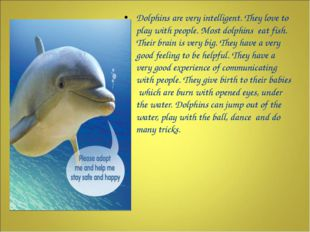 Dolphins are very intelligent. They love to play with people. Most dolphins