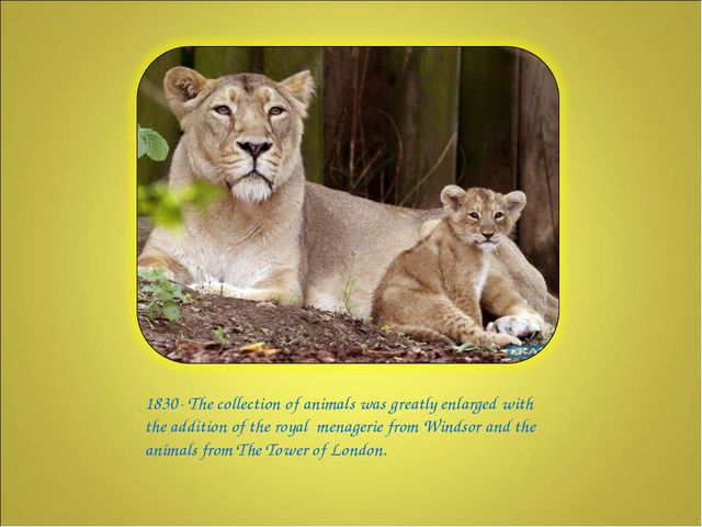 1830- The collection of animals was greatly enlarged with the addition of th...